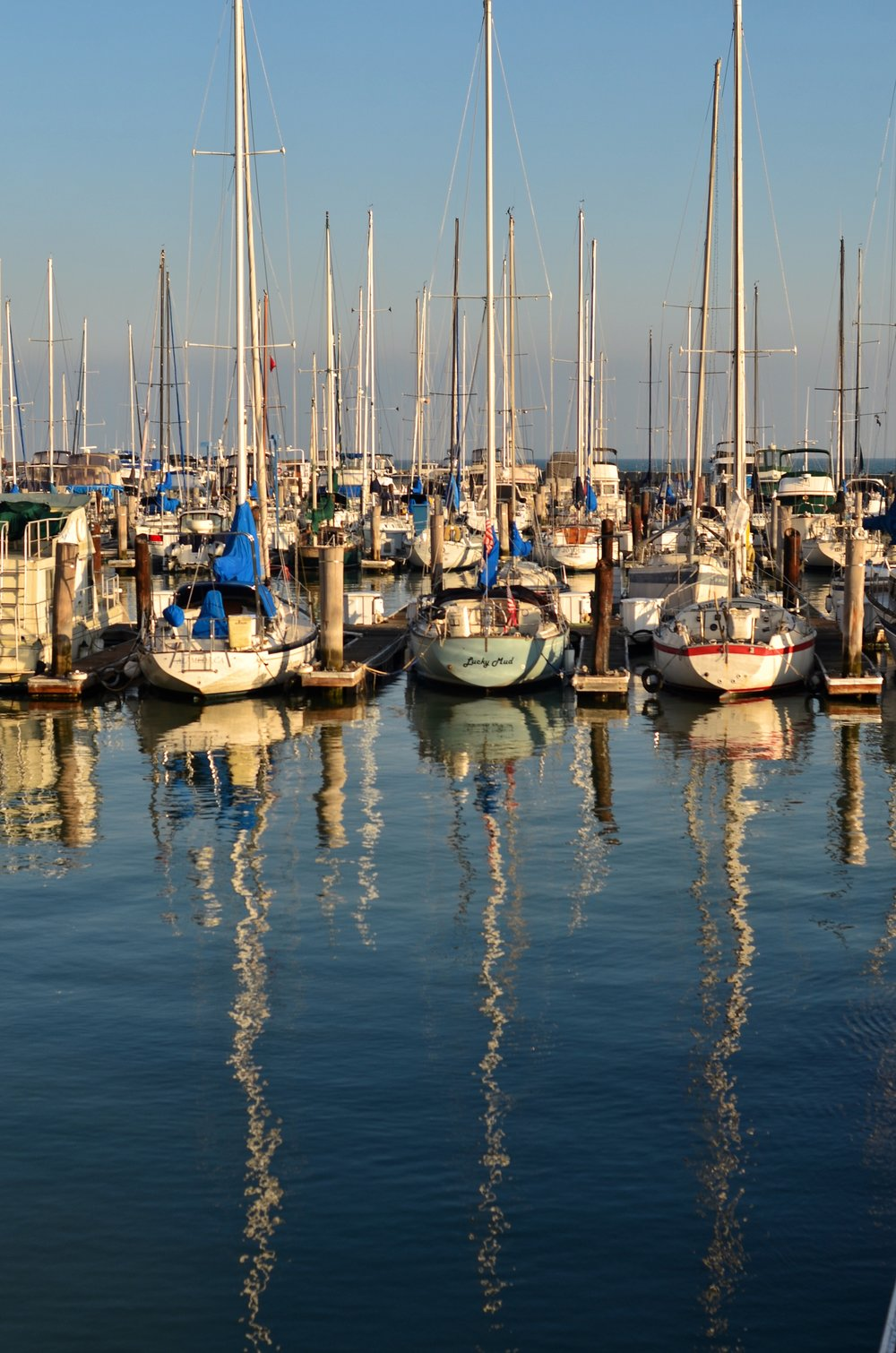 Sail Boats docked in a Marina in San Francisco Bay