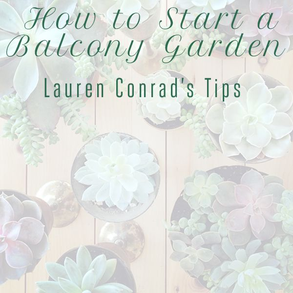 Green Thumb Starting a Balcony Garden by Lauren Conrad featured on Weekly Update by chelceytate.com