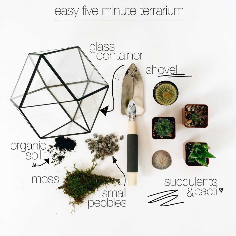 Fave Online Finds on chelceytate.com | Headed Somewhere Five Minute Terrarium