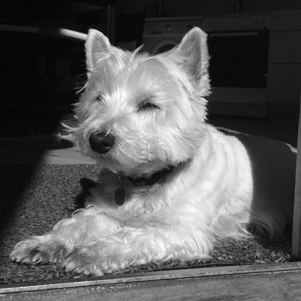 Vika    Titel : Kontorhund på deltid   Firma : Freeloader   Mail : sendflere@godbidder.org   Telefon : +45 30 28 84 42
