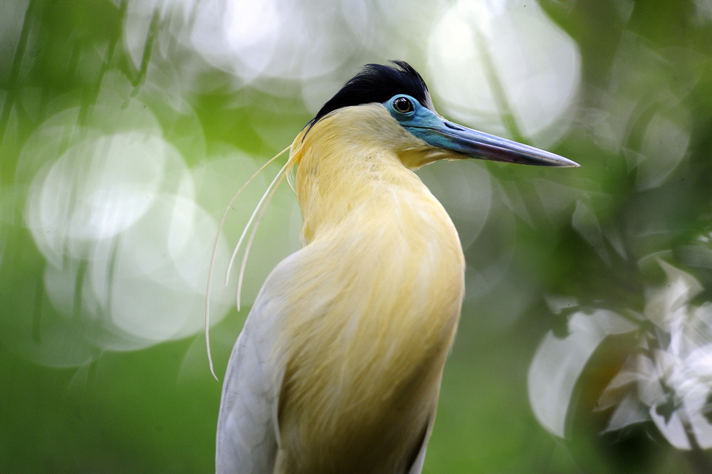 birdlife2.jpg