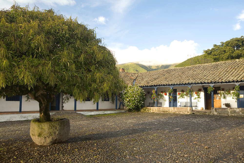 Tree-courtyard-.png