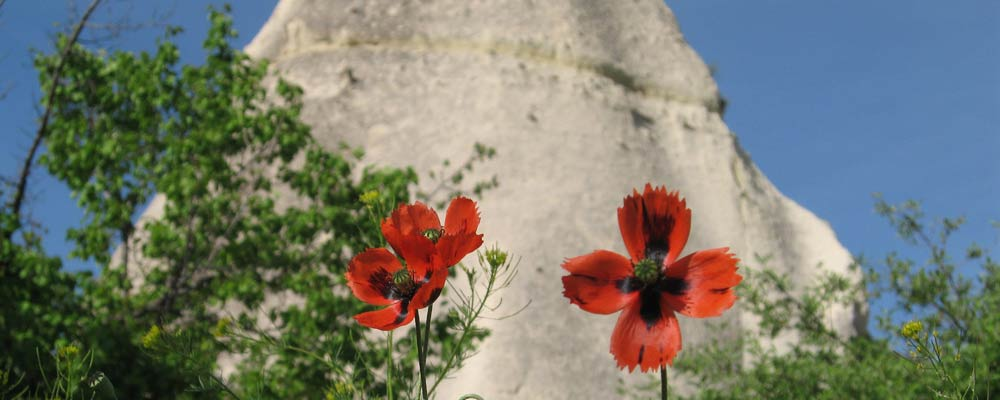 Red poppies against the unique geological formations of Cappadocia