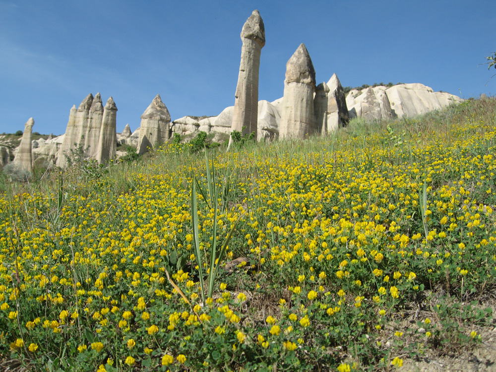 Fairy chimneys and a field of wild flowers