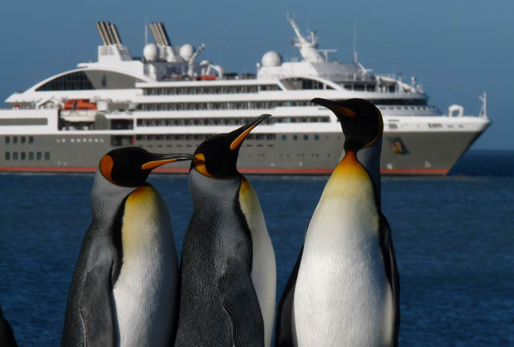 King penguins greeting the arrival of Le Boreal.  Photo: A&K