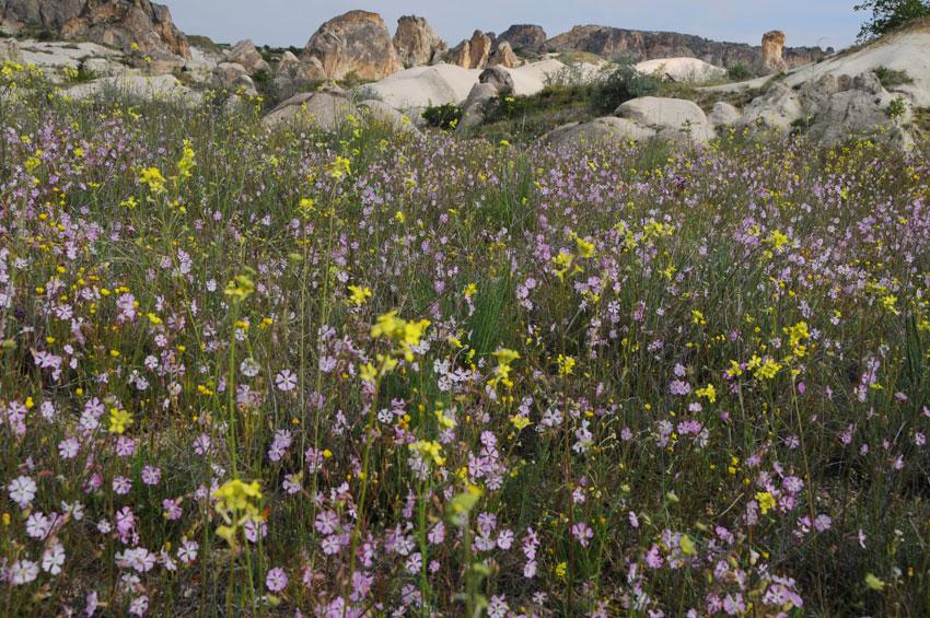 Enjoying walks through fields of wild flowers