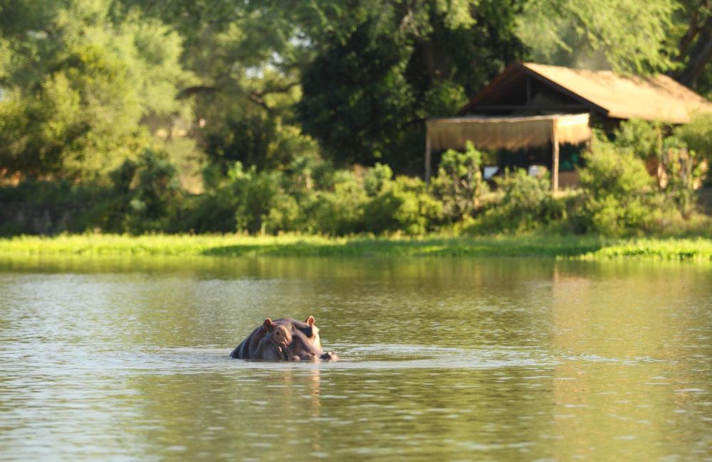 05-chongwe-hippo.jpg
