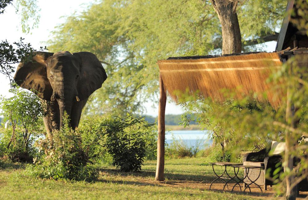 06-chongwe-elephant.jpg