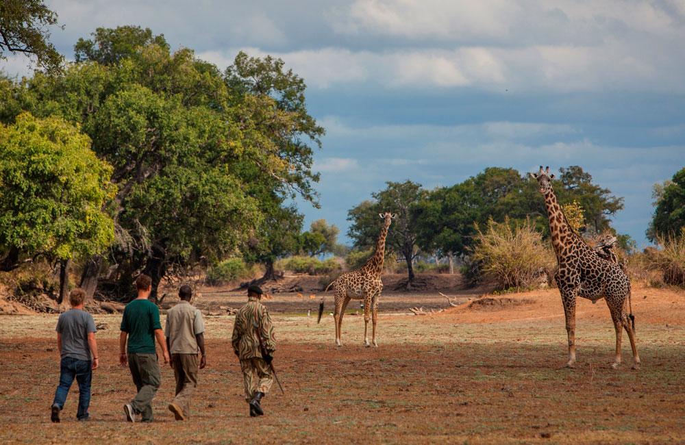 09-luangwa-giraffe.jpg