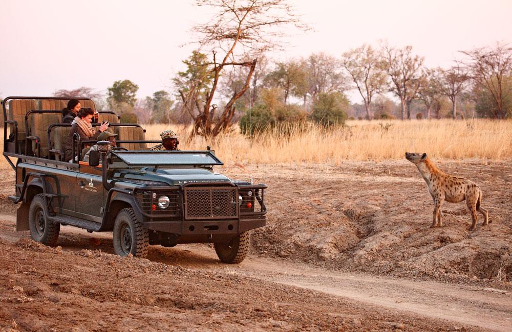11-luangwa-hyena.jpg