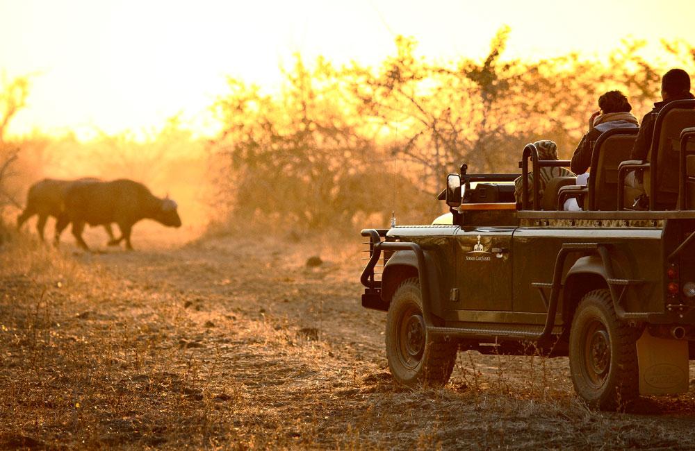 13-luangwa-buffalo.jpg