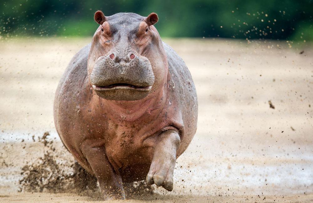 17-luangwa-hippocharge.jpg