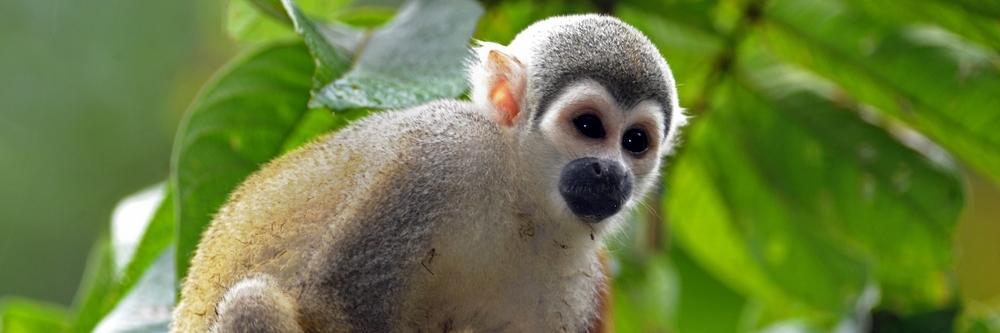 Galapagos and Amazon Jungle