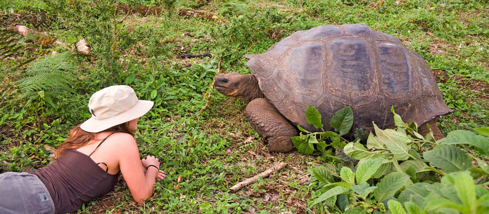 Getting up close and personal with Santa Cruz tortoises