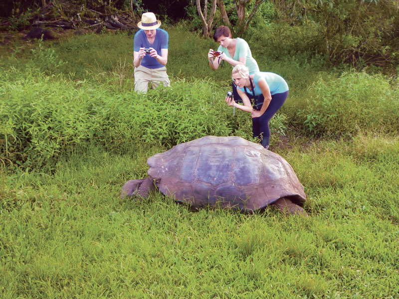 Viewing tortoises in the wild on Santa Cruz