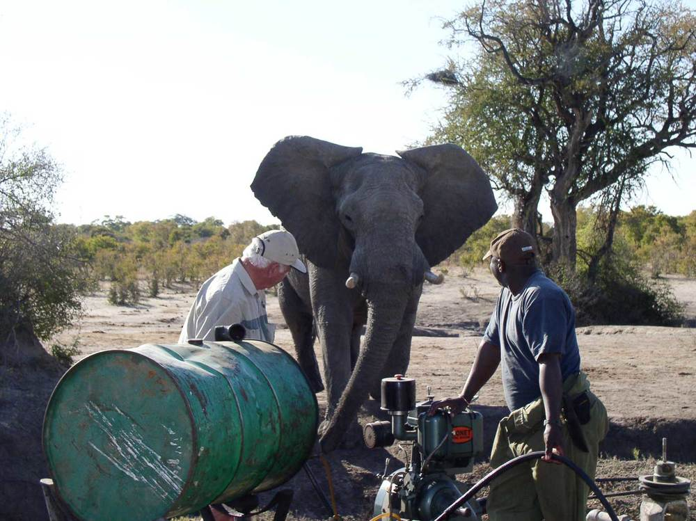 A thirsty bull elephant waiting for the water to flow. (Photo: Imvelo Safaris)