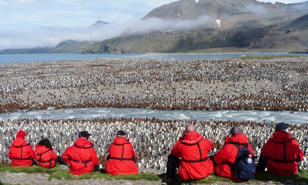Guests observing the massive king penguin rookery on South Georgia