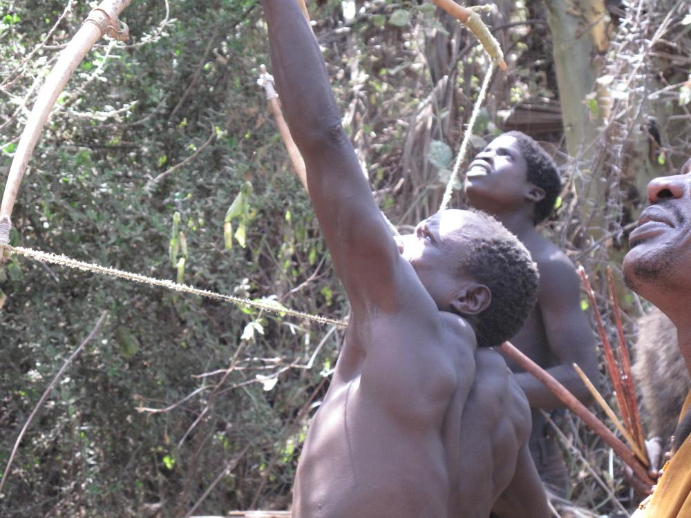 Hadza bushmen out hunting