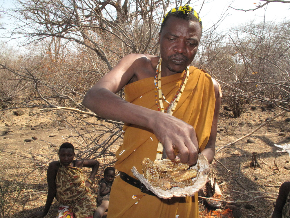 Tasting fresh honeycombs with the Hadza