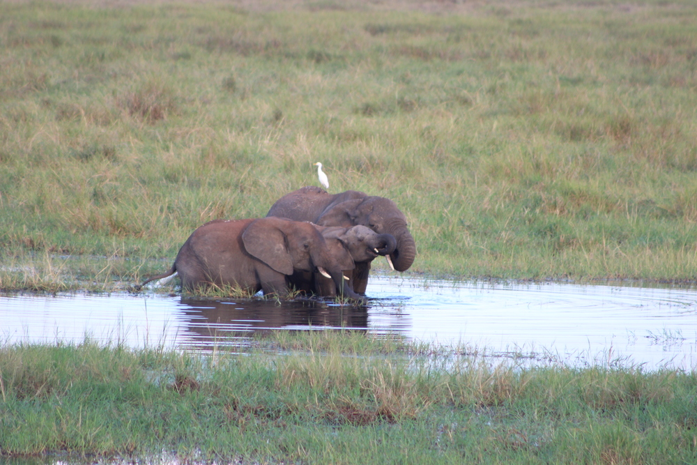 Bath time in Tarangire