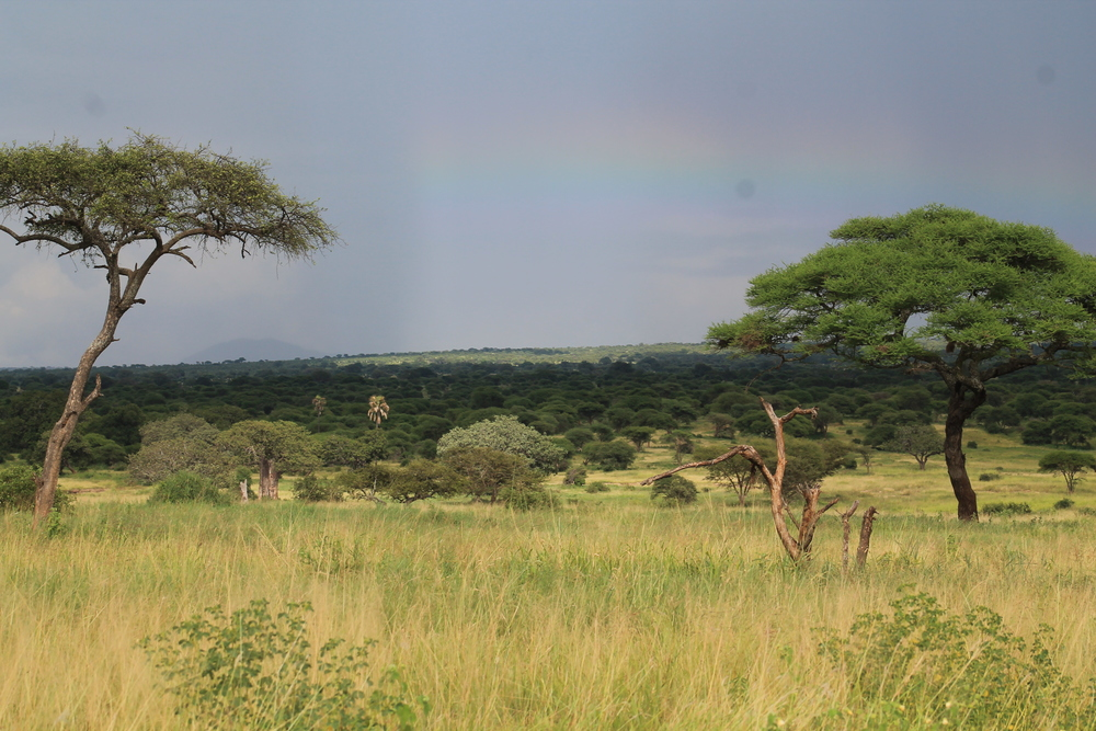 Rainbow over Tarangire
