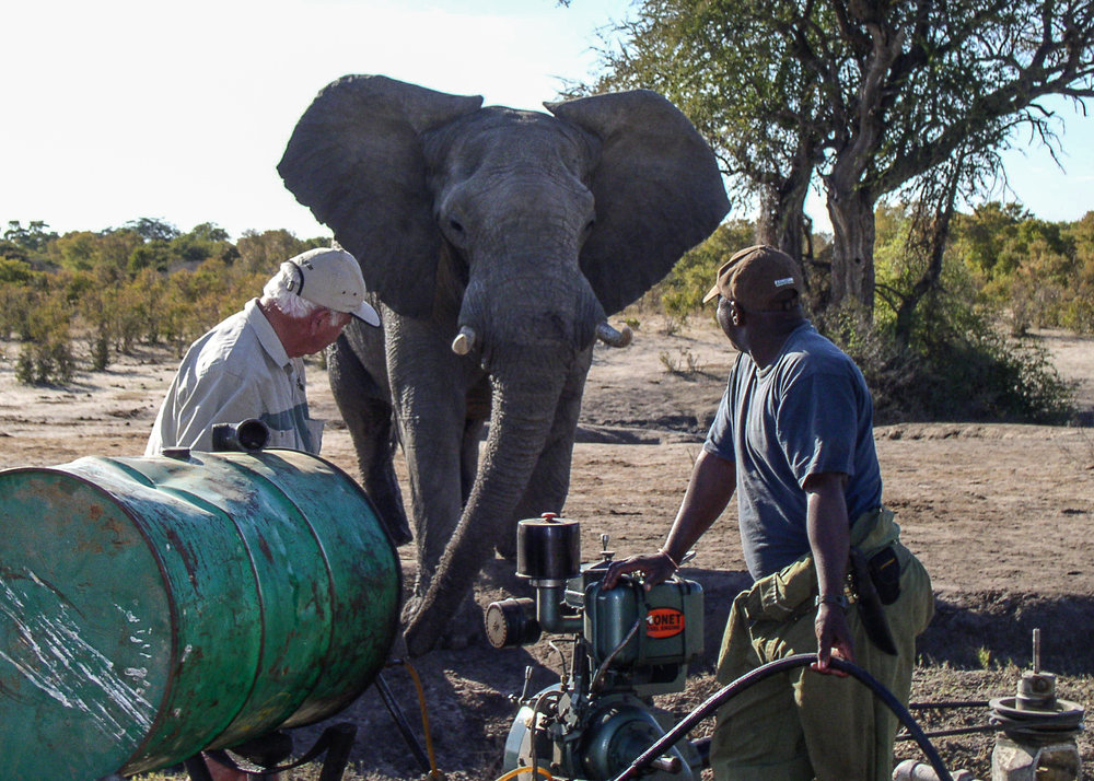 Elephant patiently waiting while water pumps are serviced photo: Imvelo Safaris