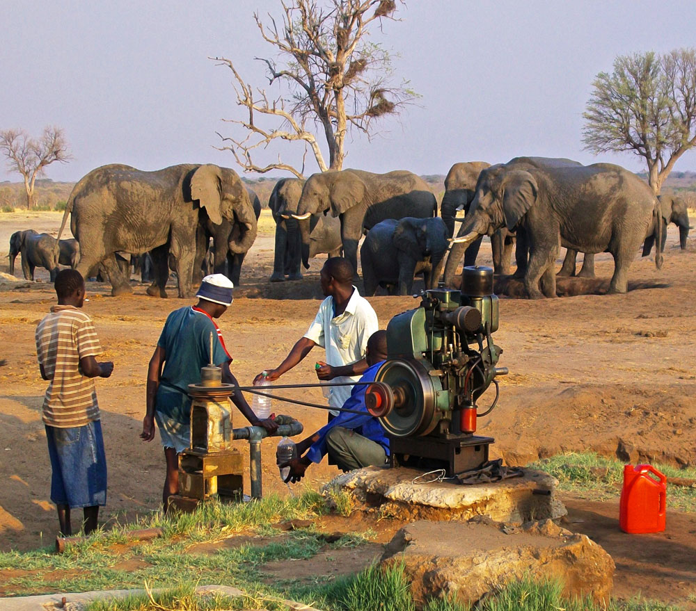 Elephants at water hole supplied by borehole