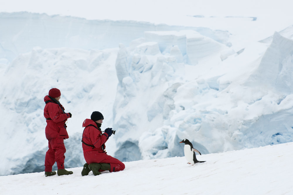 Guests observing a Gentoo penguin photo © Daisy Ghilardini