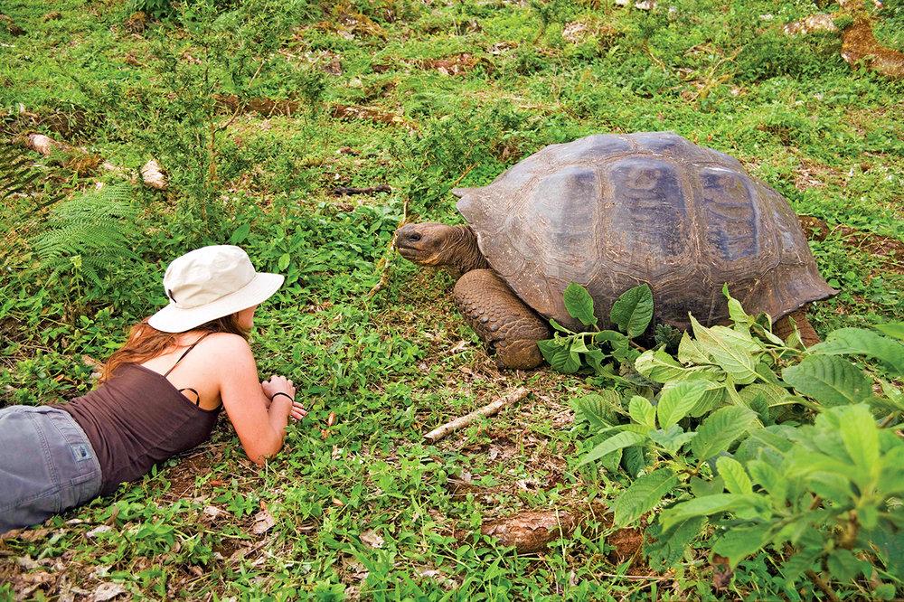 Closeness_TortoiseNicole.jpg