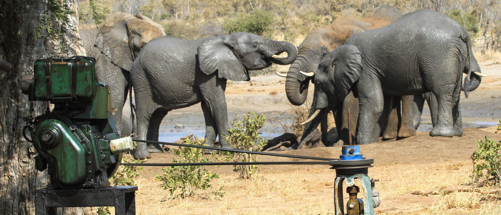 Day 6 - Helping Hwange's Thirsty Herds