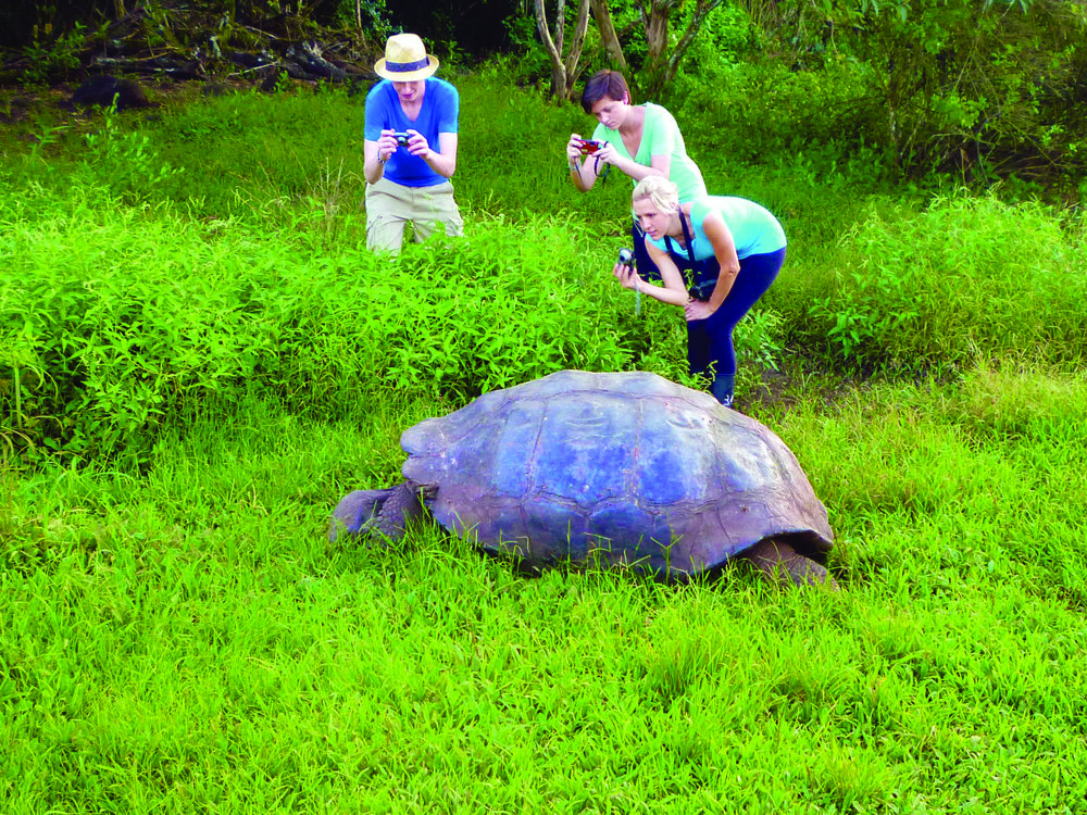 Spend time with giant tortoises in the wild on Santa Cruz
