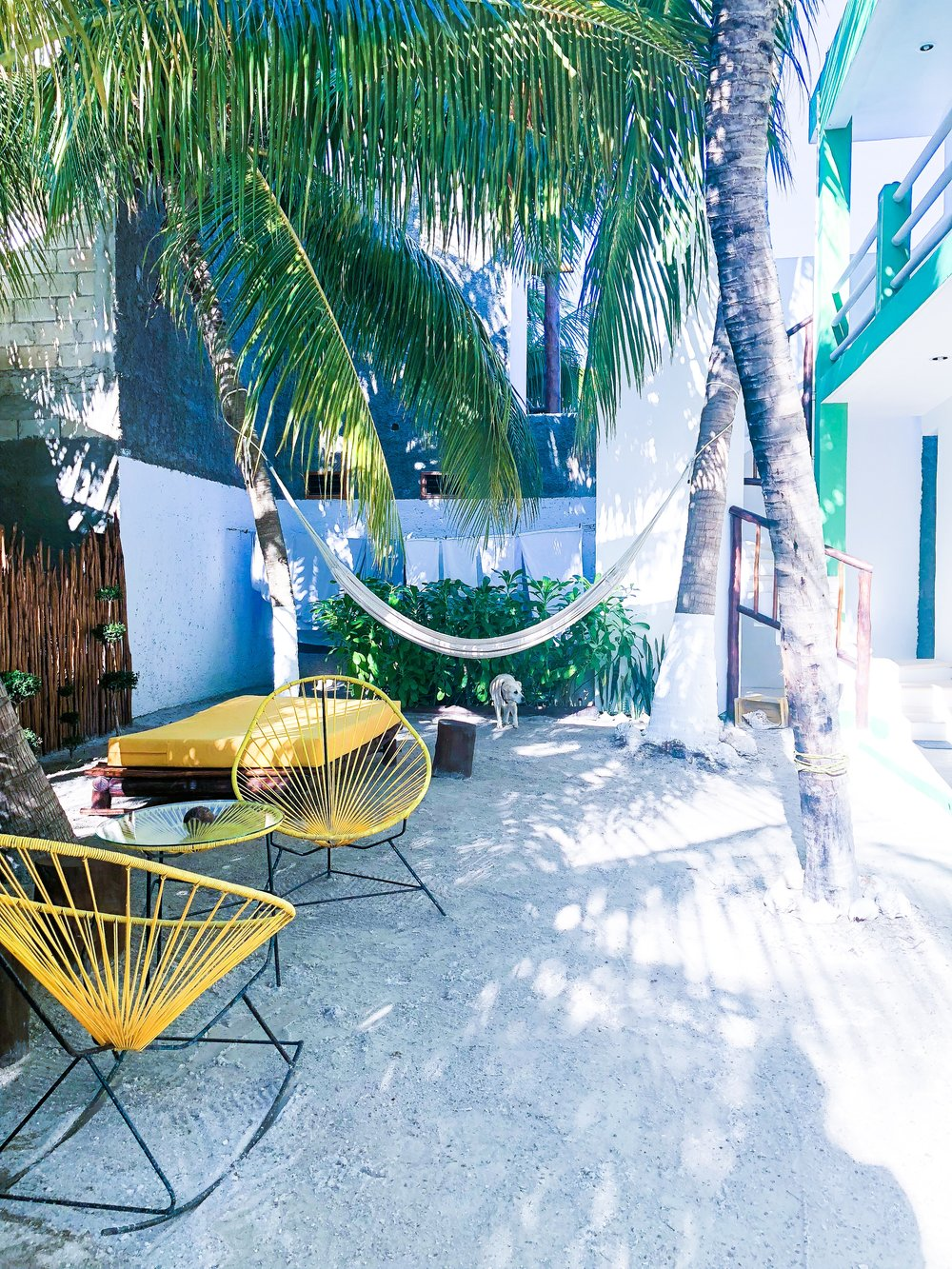 One of the places we slept! The owners had the sweetest pups! - Isla de Holbox, Mexico
