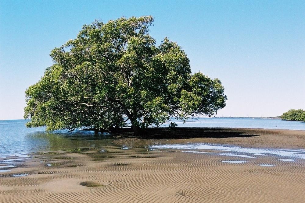 Tree in mud.JPG