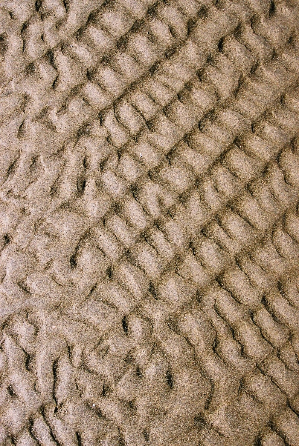 ichnology in the sand.jpg