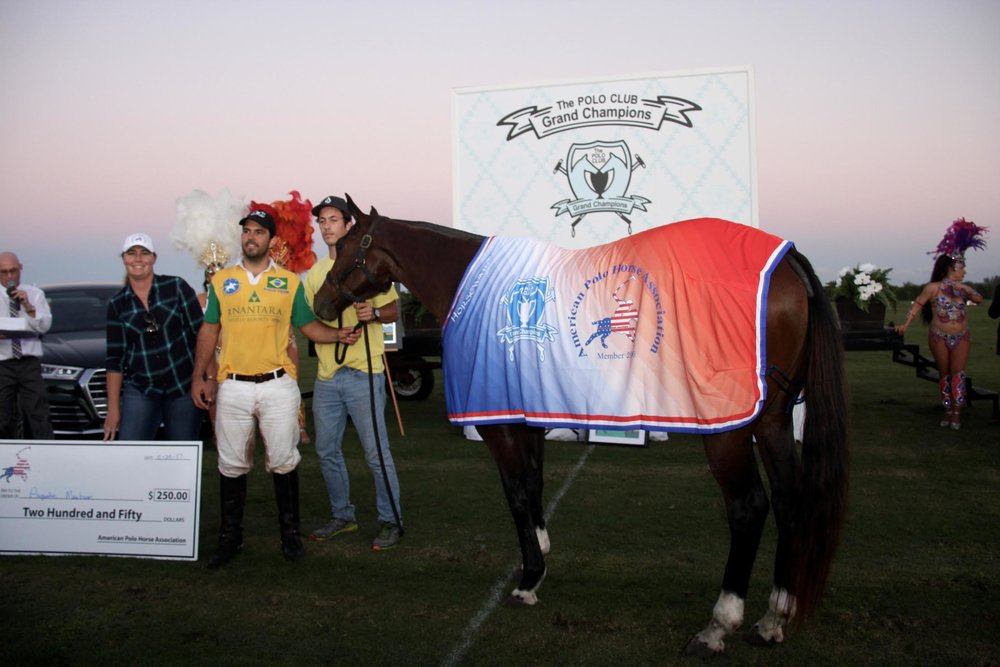 American Polo Horse Association Best Playing Pony for Brazi.SA.jpg