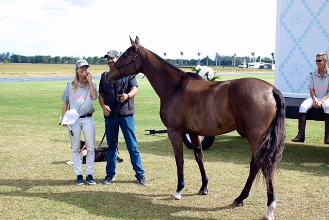 Masai of Palm Beach Best Playing Pony.jpeg