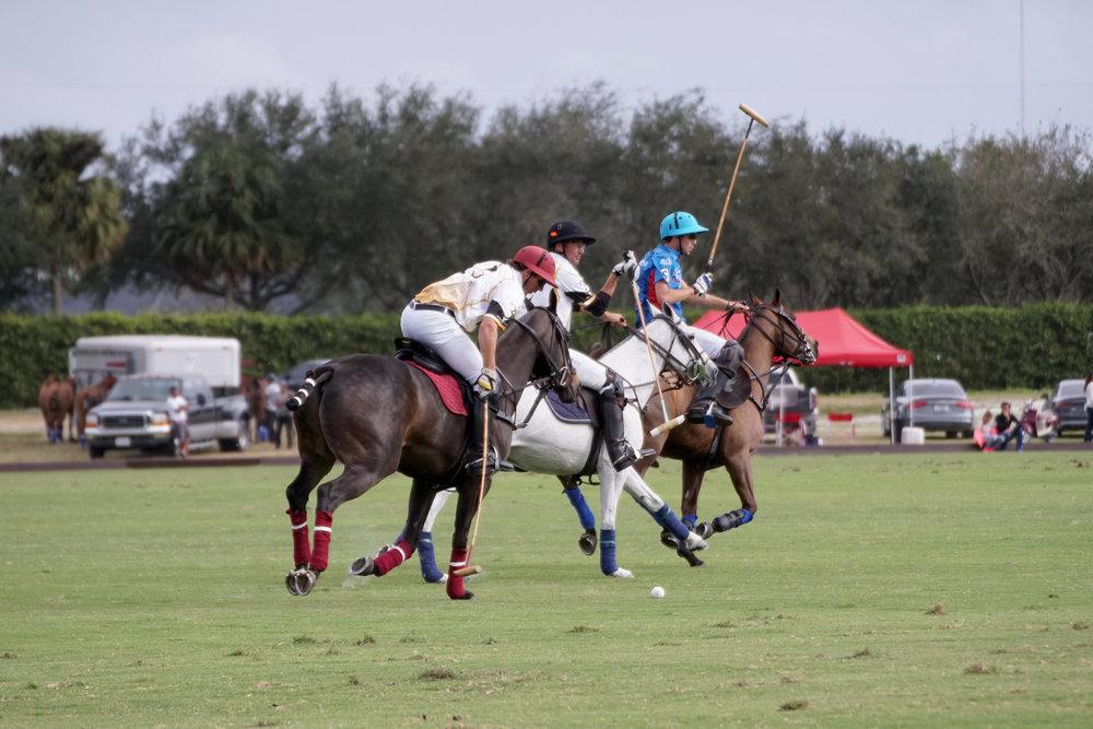 Scott Swerdlin of Palm Beach Equine mark.JPG