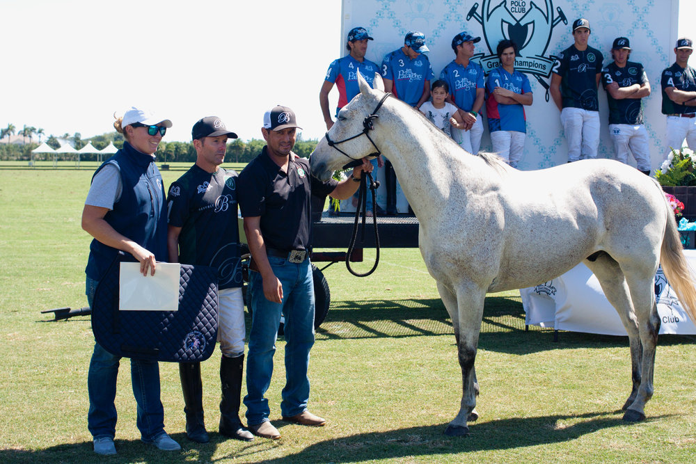 APHA Best Registered Horse of the game, Echarpe.JPG