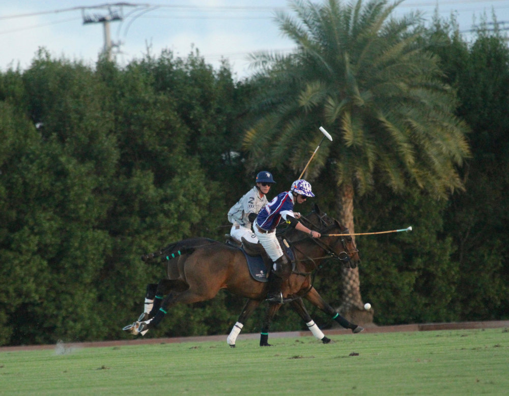 Tony Calle of American Polo Horse wo.jpg