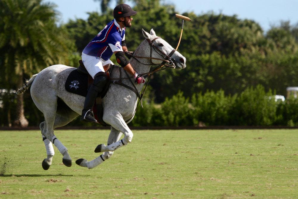 Tito Gaudenzi of American Polo Hor.jpg