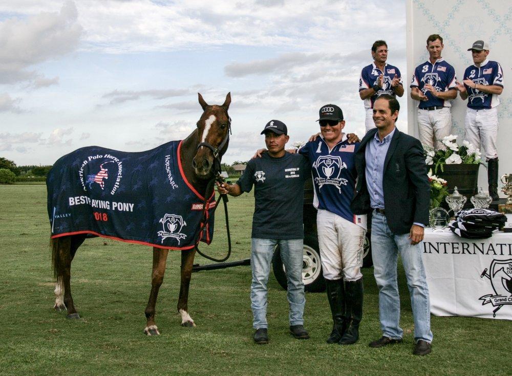 American Polo Horse Associati.jpg