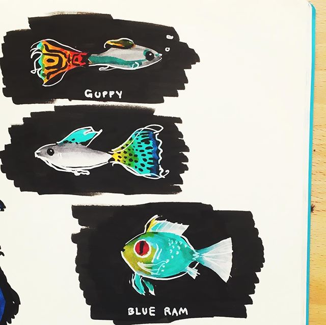 Here are some of the super cool #fish in my #aquarium so far we've only named a few, the #blueram is named Sonofabitch per @theresa.fitz suggestion 🐟 #sketchbook #sketching #illustration #markers #ink #guppy #instaart #fishtank