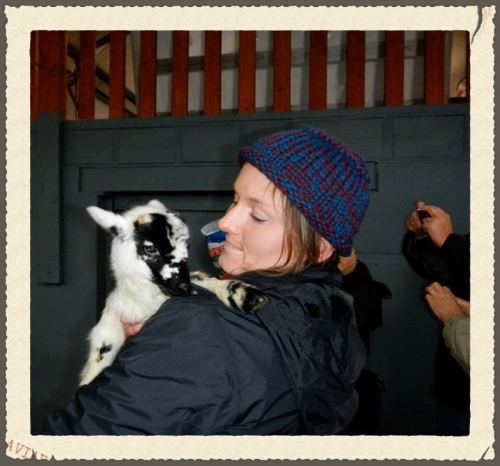 This was our baby sheep.  We named him Jack.