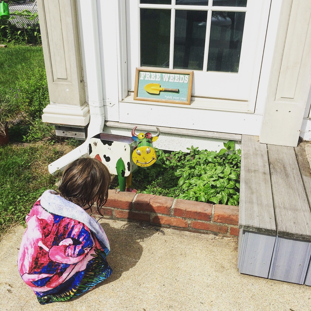 Checking out Gigi's basil bed.