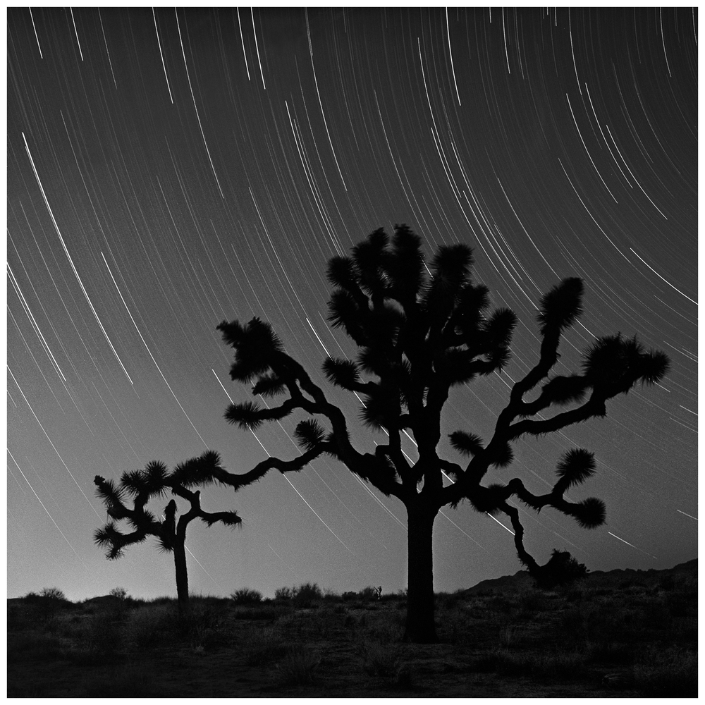 Star Tracks Over Joshua Trees