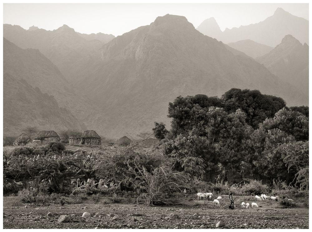25Khamis Beni Sa'ad Sheep FarmKhamis Beni Sa'ad Sheep Farm_DSC2857.jpg