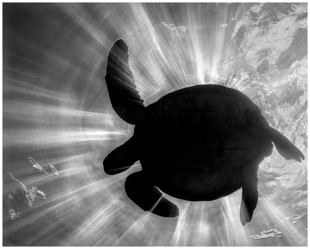 Turtle Eclipse.jpg