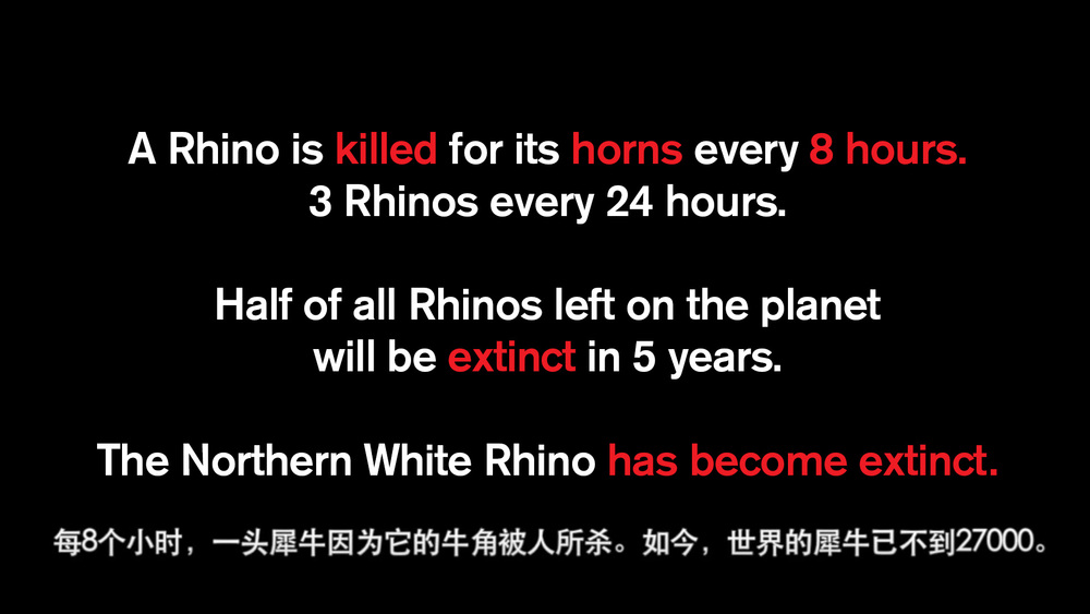Rhinos-every-8-hours-3-a-day.jpg