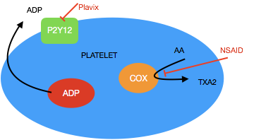 Plavix NSAID.png