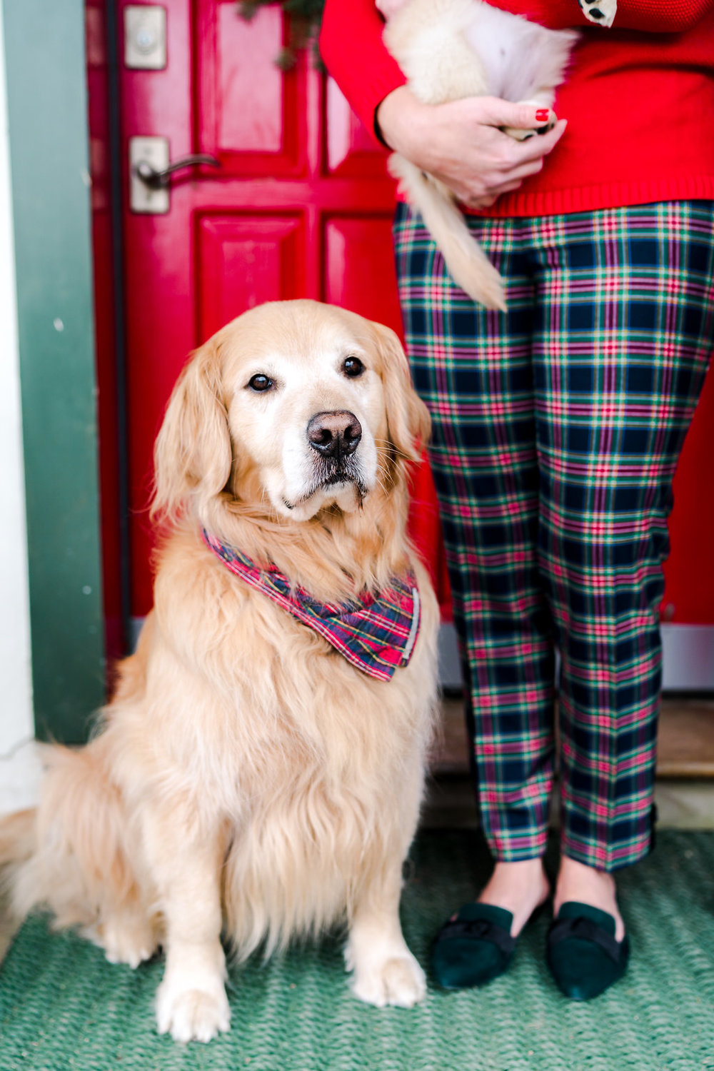 RODEOCOPHOTO_AbbyCapalbo_December_-15.jpgVermont Ski House Chalet Golden Retriever Puppy